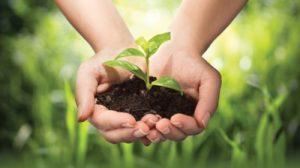 Các giải pháp bảo vệ môi trường sống quanh chúng ta
